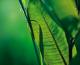 La Clorofilla: dalla natura un grande aiuto