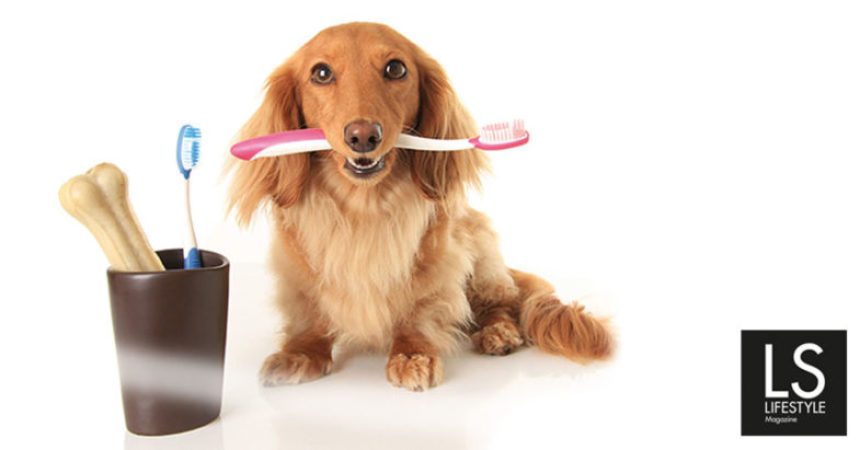 Igiene orale e detartrasi negli animali domestici