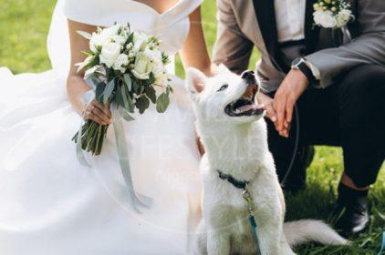 Wedding with my sweet pet